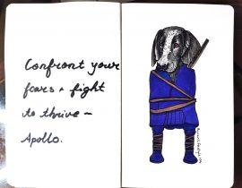 Apollo pet portrait fashion makeover