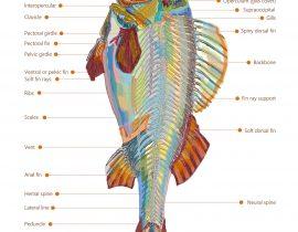 fish skeleton | 04.19.2021