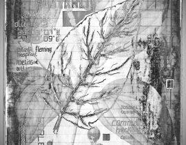 flora mirabilis | graphitus 04