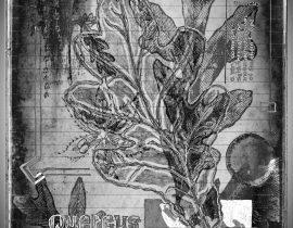 flora mirabilis   graphitus 06