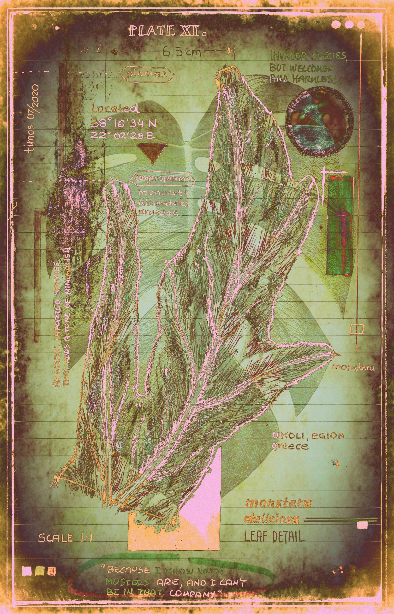 plantae   encaustic plate 11