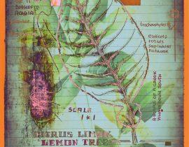 plantae | encaustic plate 12