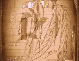 timothyensis codex | folio 03