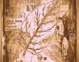 timothyensis codex | folio 04