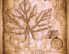 timothyensis codex | folio 05
