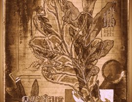 timothyensis codex | folio 06
