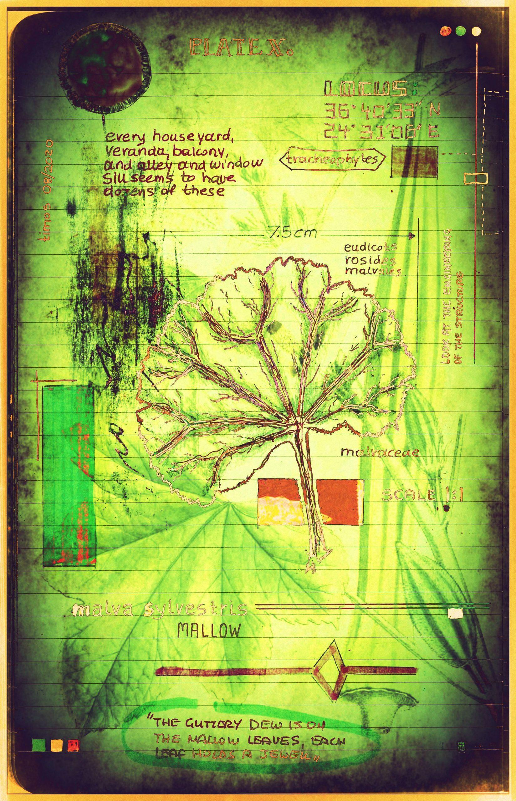 plantaneum prosperatus | plate 10
