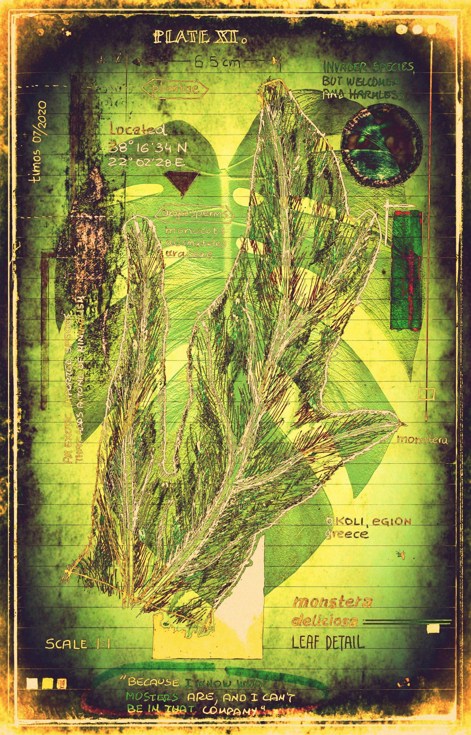 plantaneum prosperatus | plate 11