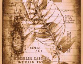 timothyensis codex | folio 12