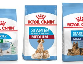 Best Food For Pregnant Dogs
