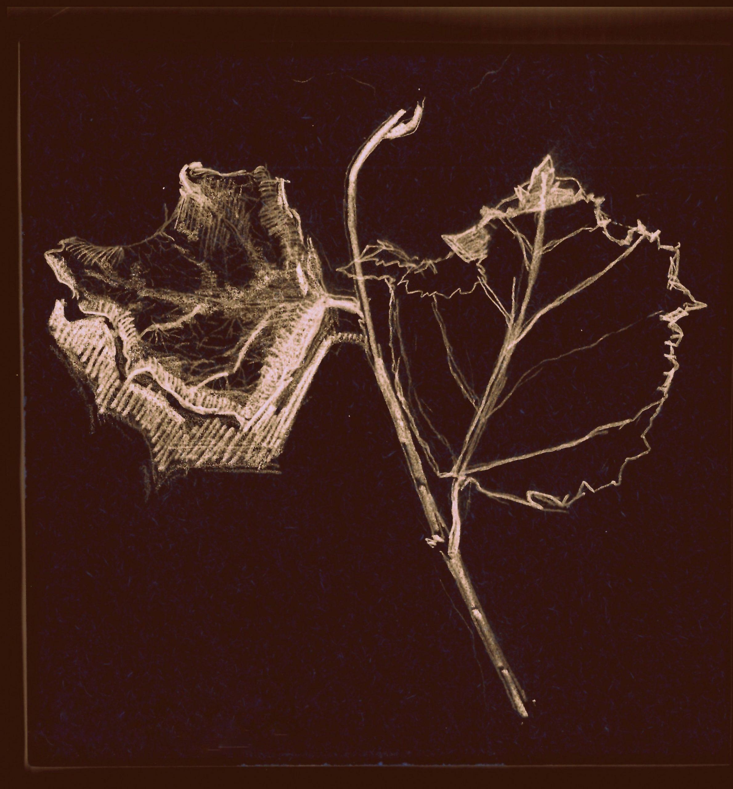 twig of vine | 06.22.2021