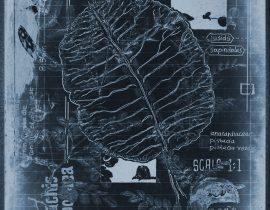 botanicatus antiqcuus | specimen 02