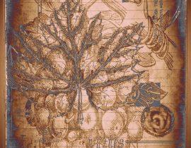 plantae solaricus   tabla 05