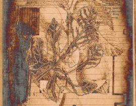 plantae solaricus | tabla 07