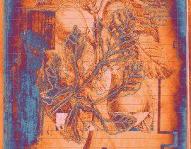 botanica ideata :: folio 007