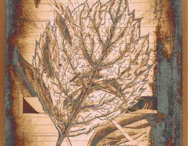 plantae solaricus   tabla 09