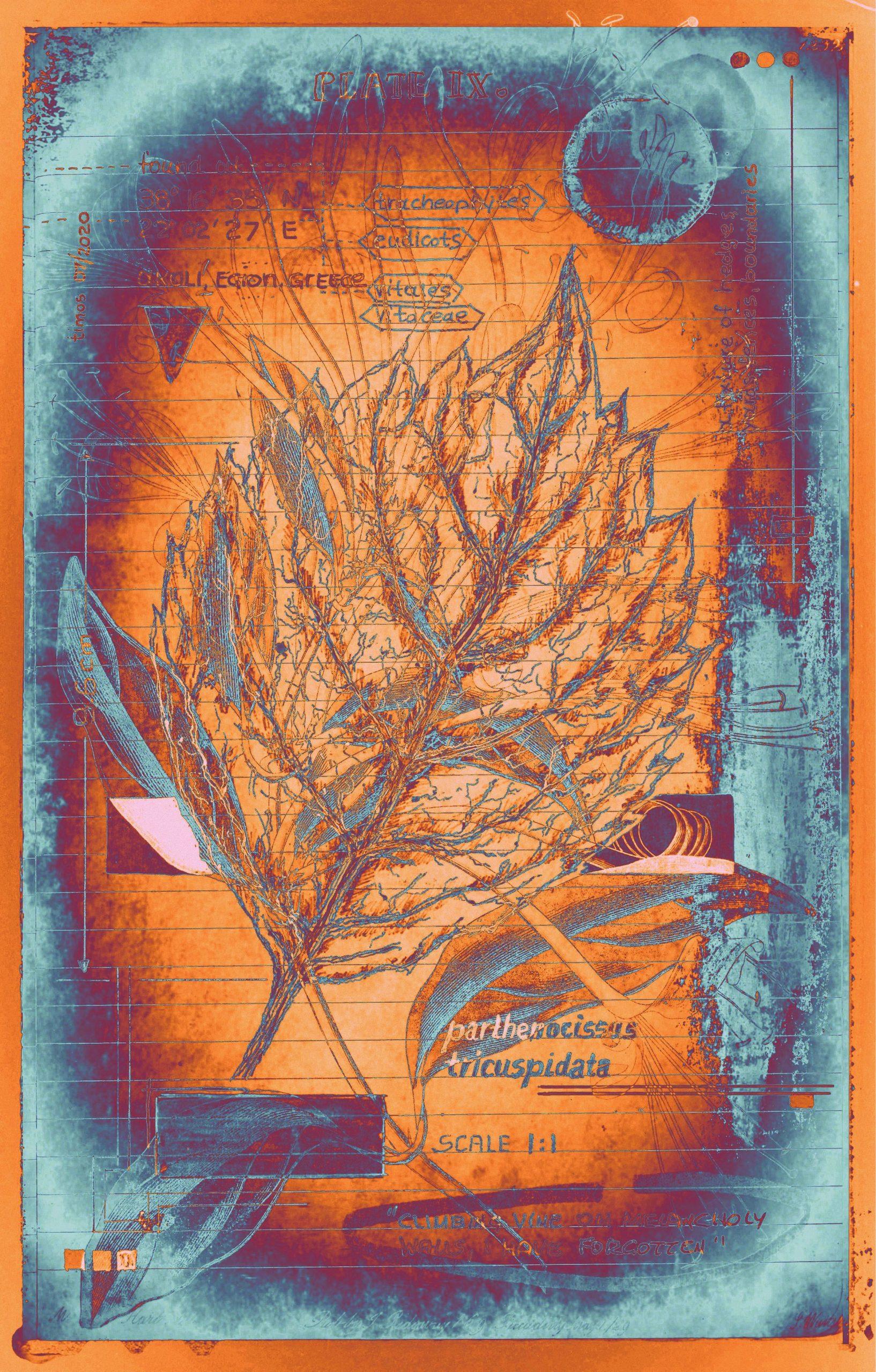 botanica ideata :: folio 009