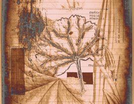 plantae solaricus   tabla 10