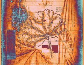 botanica ideata :: folio 010