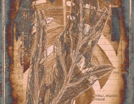 plantae solaricus   tabla 11