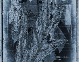 botanicatus antiqcuus | specimen 11