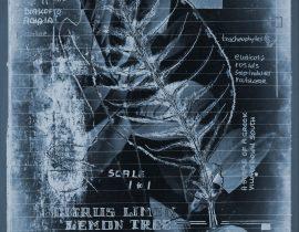 botanicatus antiqcuus | specimen 12