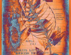 botanica ideata :: folio 012