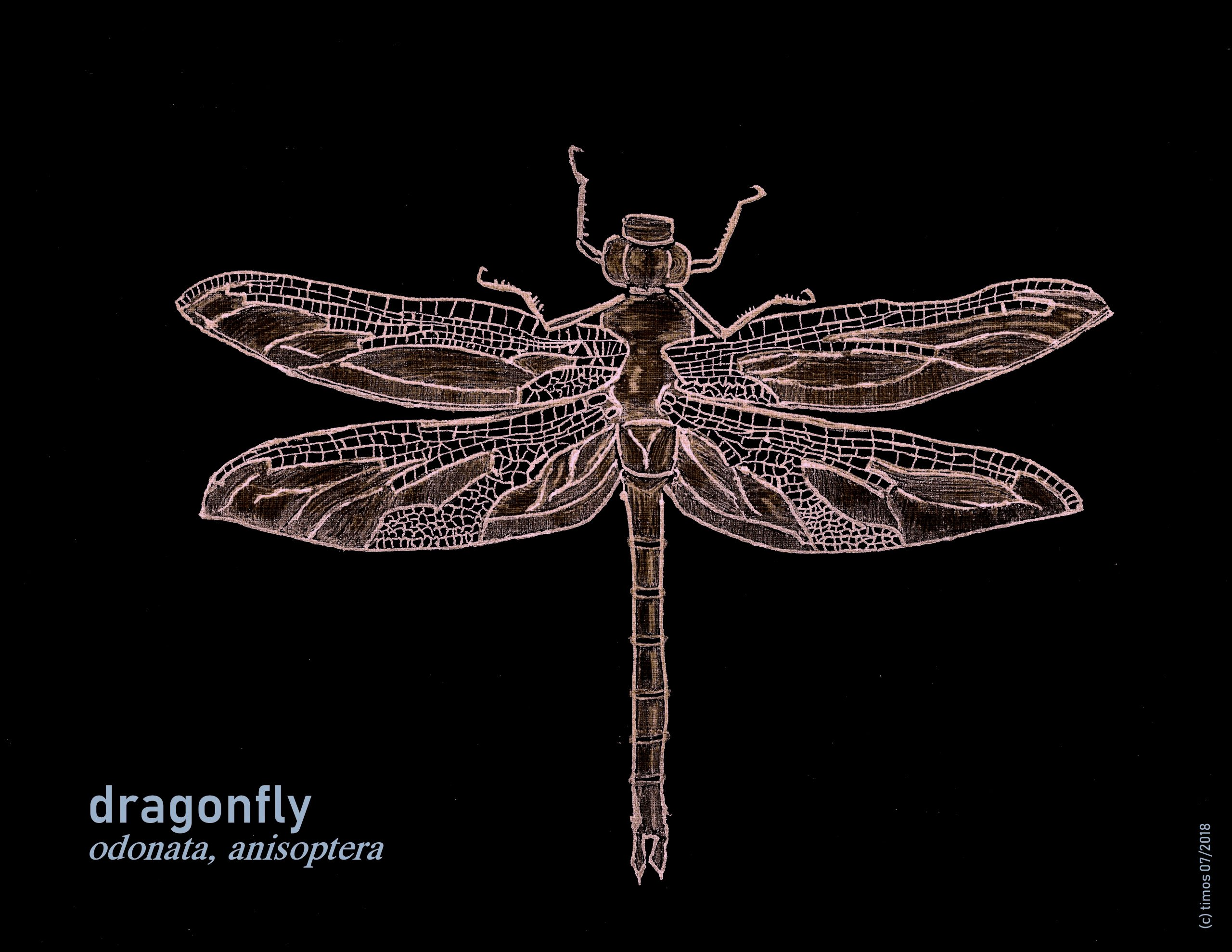 fly-dragon