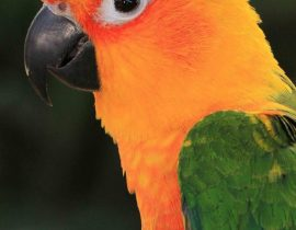 Welcome to Talkie Parrot!