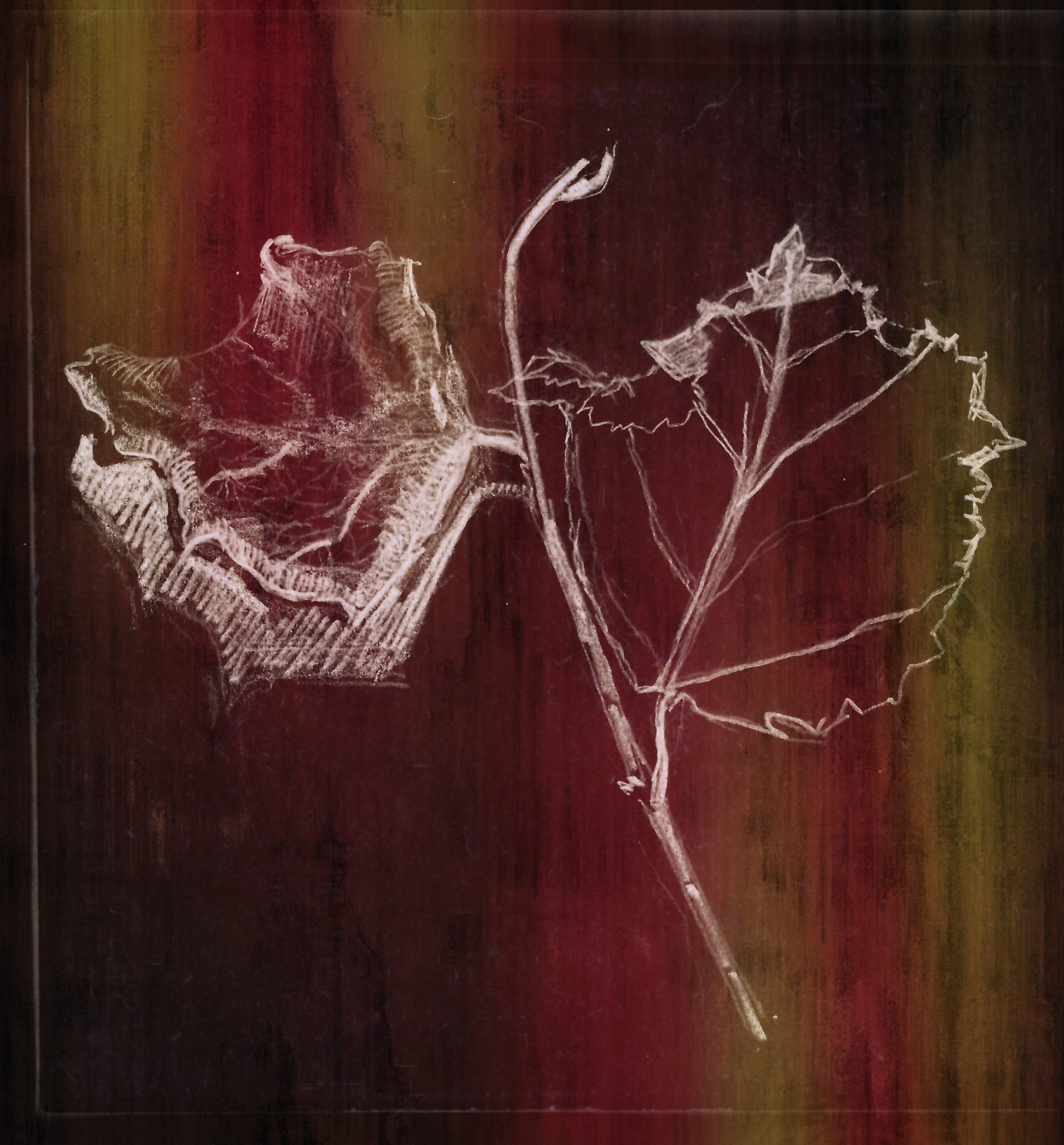 twig of vine | 09.03.2021