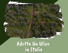 Adotta Un Ulivo in Italia