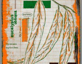 vitae verdantix planta / folio a.03