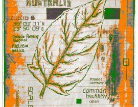 vitae verdantix planta / folio a.04