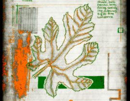 vitae verdantix planta / folio a.07