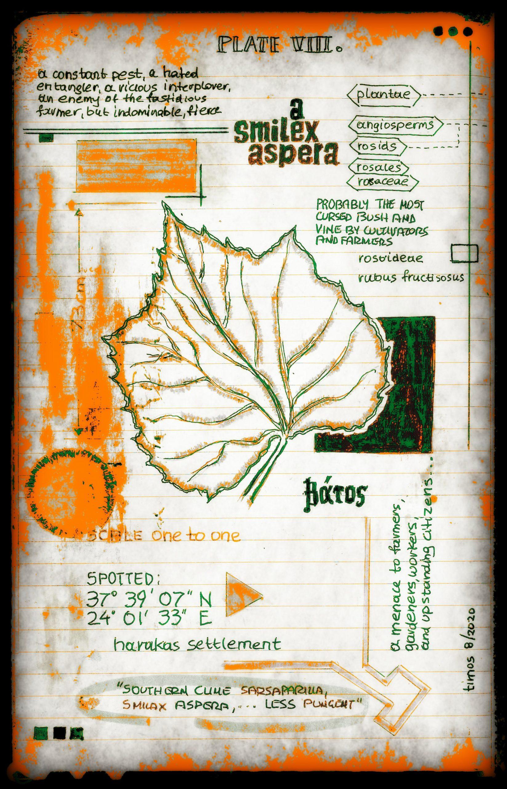 vitae verdantix planta / folio a.08