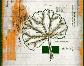 vitae verdantix planta / folio a.10
