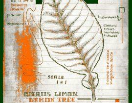 vitae verdantix planta / folio a.12