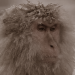 Profile picture of VladimirChernyshevsky